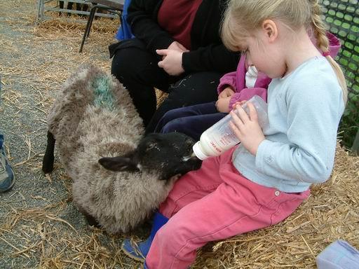 lambfeeding.jpg